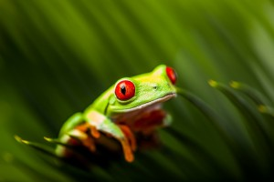 Wonderful exotic frog, tropical theme